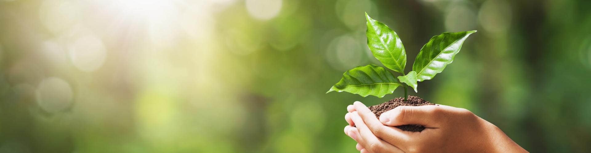 sostenibilità margara