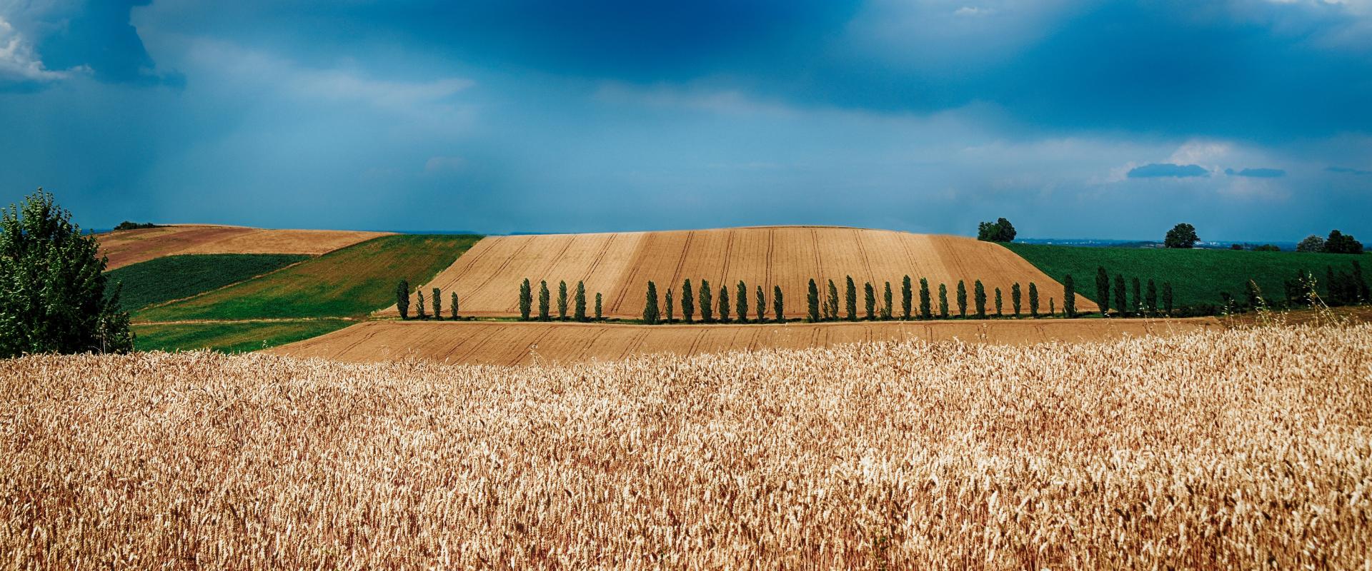 paesaggio Monferrato